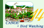 Canoe Bird Watch