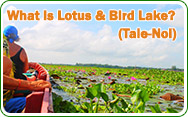 What is Lotus and Bird Lake